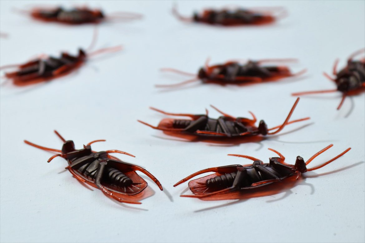 Make your home hygienic with pest control services